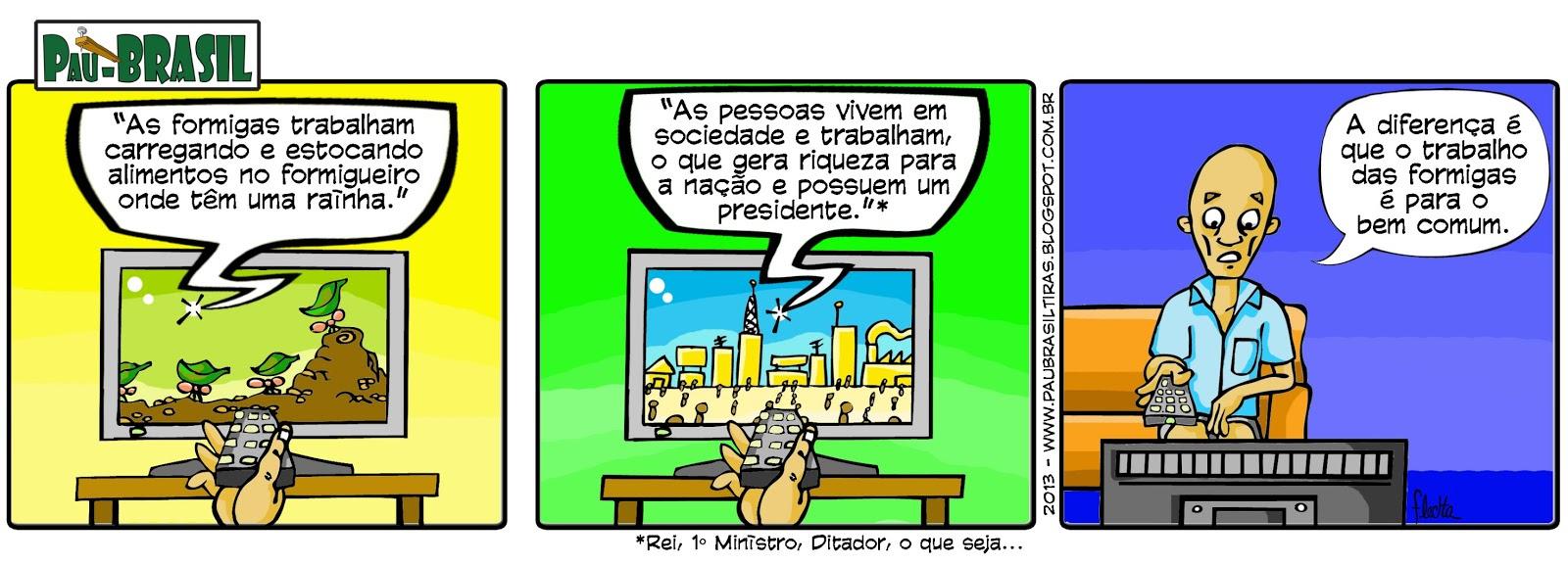 nº 05 Pau-Brasil