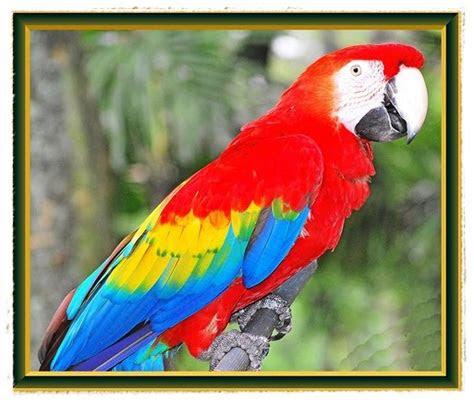 gambar burung  lucu  bisa berbicara dunia binatang
