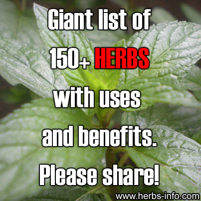 List Of 160+ Herbs With Uses And Benefits!