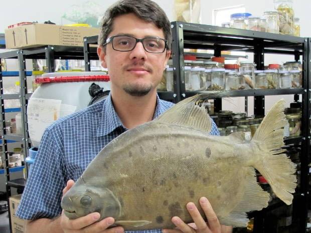 O engenheiro de pesca Marcelo Andrade com a piranha vegetariana descoberta no rio Trombetas, oeste do Pará (Foto: Tommaso Giarrizzo/ Arquivo pessoal)