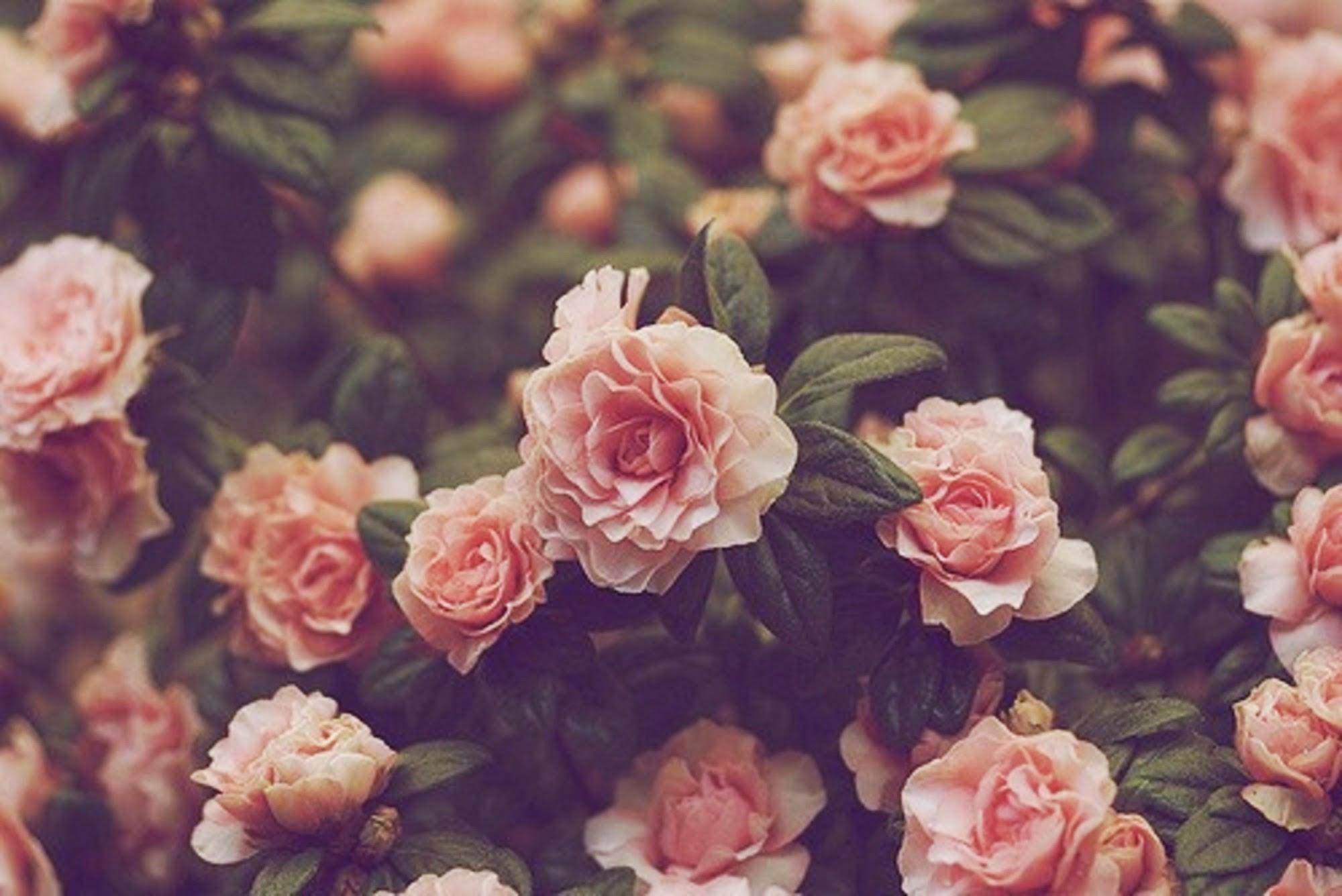 Flower Flower Aesthetic Vintage Desktop Wallpaper