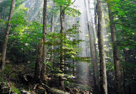 World's biggest terrestrial carbon sinks are found in young forests
