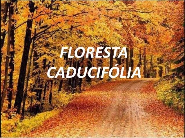 Resultado de imagem para florestas caducifólias