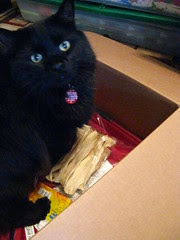 Huggy Bear helps pack the box