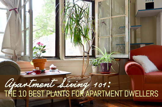 The 10 best plants for apartment dwellers