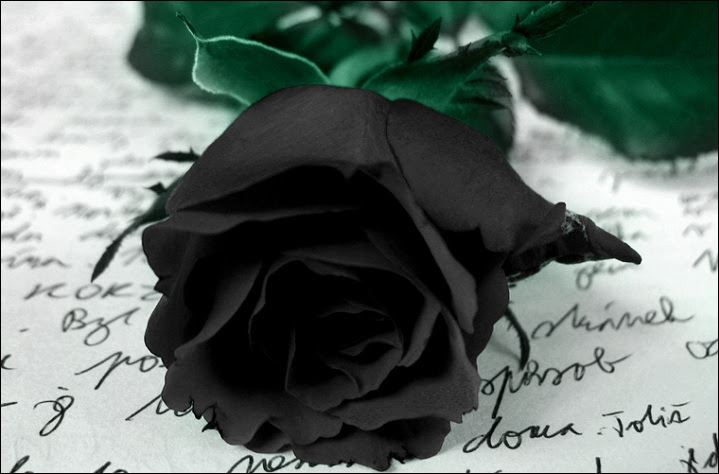 Black Rose Beauty That Doesnot Existfun Guerilla