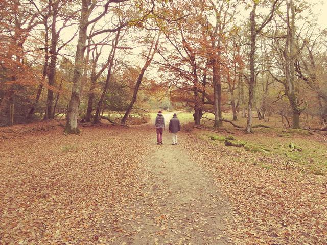 Walk in Lyndhurst