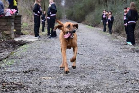 Dog Goes for Walk, Unintentionally Runs Half-Marathon, Finishes in 7th Place