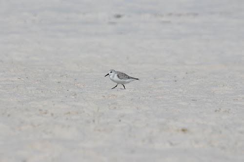 "A Photo for Friday: ""Another Beach Bird"""