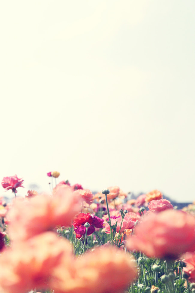 color, colorful, cute, flower, flowers, garden, green, hipster, infinite, land, landscape, lovely, mountains, natural, nature, peonies, photo, photograph, photography, pink, pretty, red, sky, spring, sun, tree, tulips, vintage