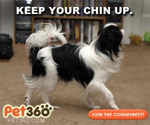 Pet360 Meme