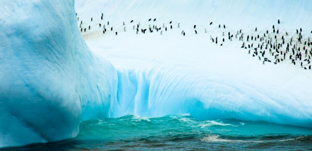 Penguins on South Orkney Island, Antartica