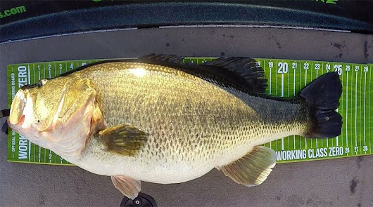 Giant Double Digit Bass - Denton Texas - Fishingreporters.com