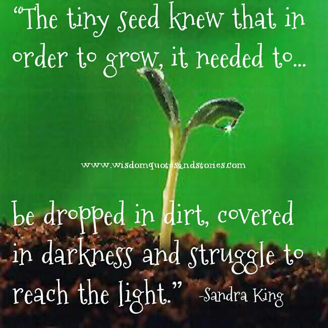 The Tiny Seed Wisdom Quotes Stories
