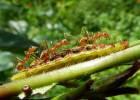 Día de la Tierra: por qué hay que proteger la 'pequeña' biodiversidad