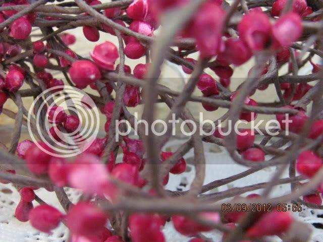 photo earlyspring2012004-1.jpg