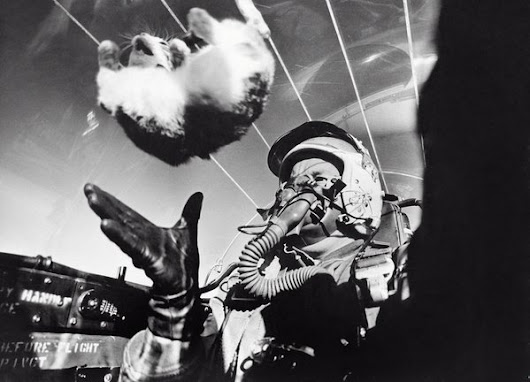 "Andrew Rader on Twitter: ""Studying the effects of weightlessness on a cat at 25,000 ft, 1958. It makes them angry. """