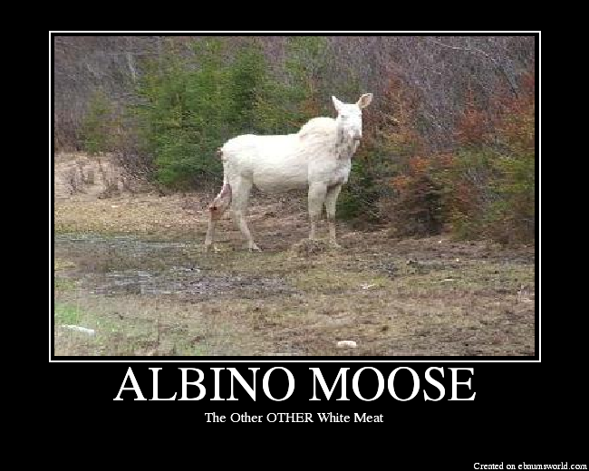 List Of Synonyms And Antonyms Of The Word Moose Hunting Quotes
