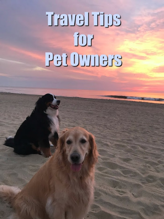 Stress Free Travel Tips for Pet Owners - (Top Tips for Dog Owners)