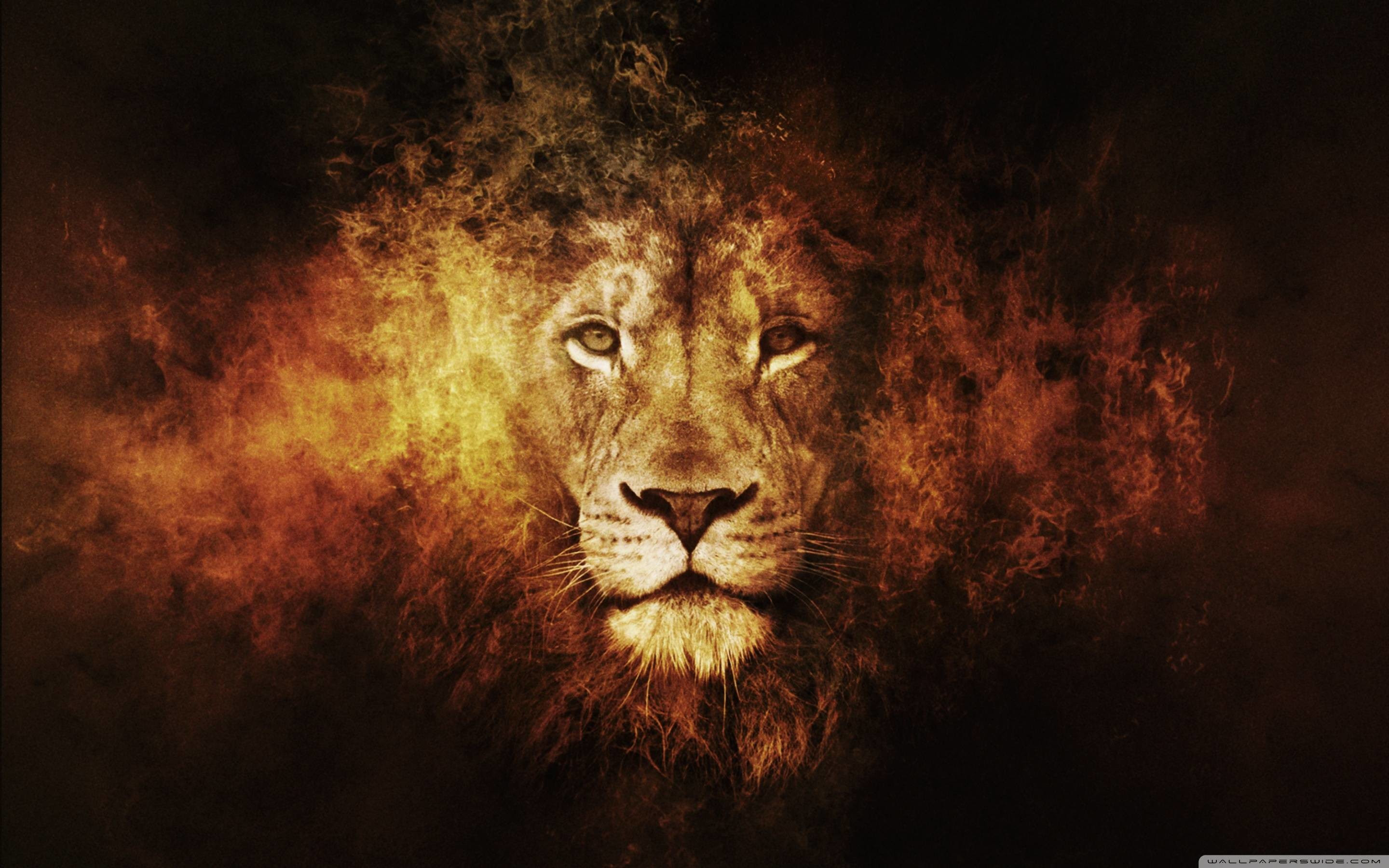 Angry Lion Wallpaper Hd Download