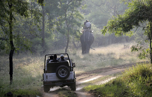 Kanha and Bandhavgarh Park Safari Cost for 2017-18