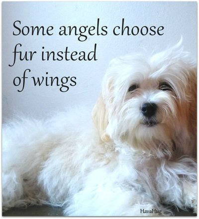 39 Pet Loss Quotes To Comfort The Grief Sympathy Card Messages