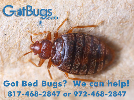 Residential and Commercial Pest Control Services in Dallas – Got Bugs