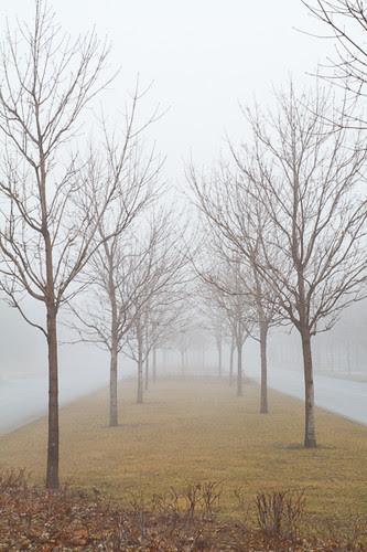 Foggy Day 2