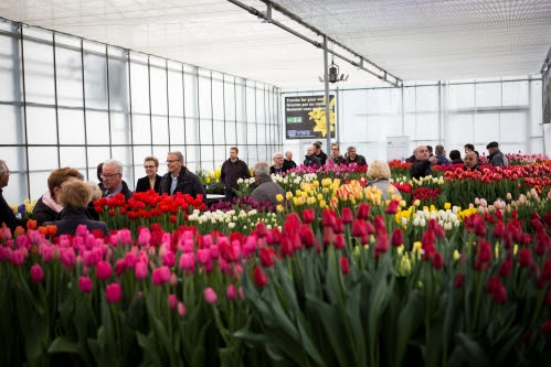 Tulip Trade Event gets ready for second edition 2017