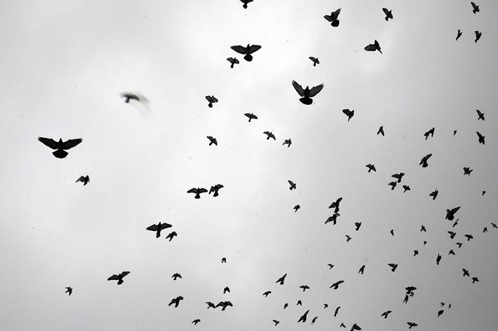 birds of the acme parking lot_1141_1 web