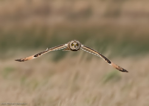 SEO by Andy Pritchard - Barrowford