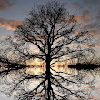 Tree Reflection | Trees | Pinterest
