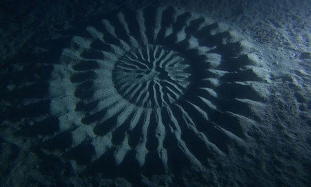 Yoji Ookata yaitu penyelam dan fotografer belajar sendiri bawah air Terungkapnya Misteri Crop Circle di Dasar Laut
