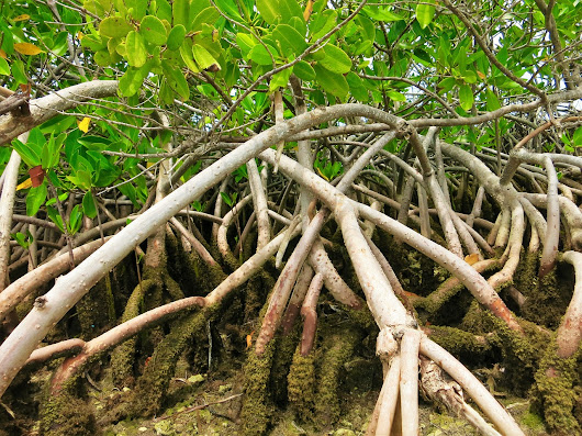 Governments Ill-Equipped to Protect Mangroves, Need to Involve Communities - Global Study - FloodList