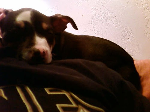 Koira_Sleeping_On_My_Shoulder