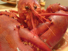 Maine Lobster from Eric