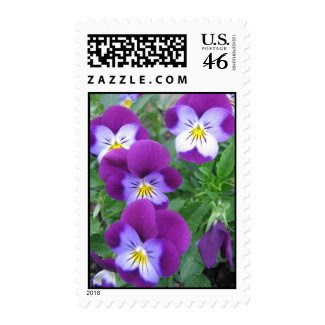 Pansy Postage Stamp stamp