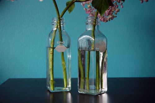 hydrangeas + labware
