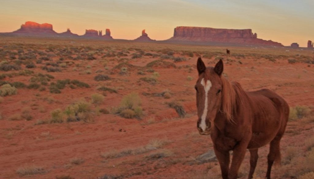 Image result for america horse with no name images