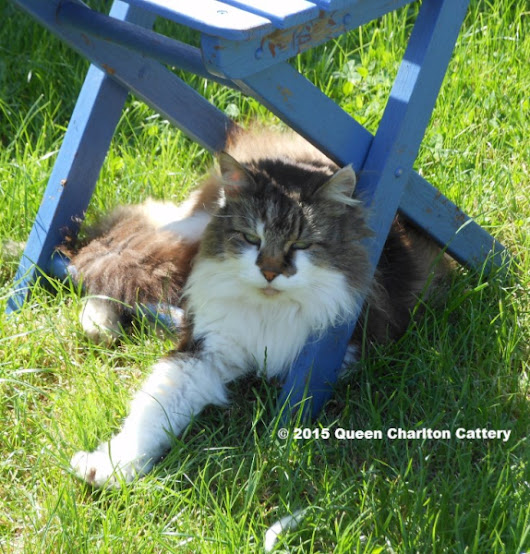 Queen Charlton Cattery Bristol