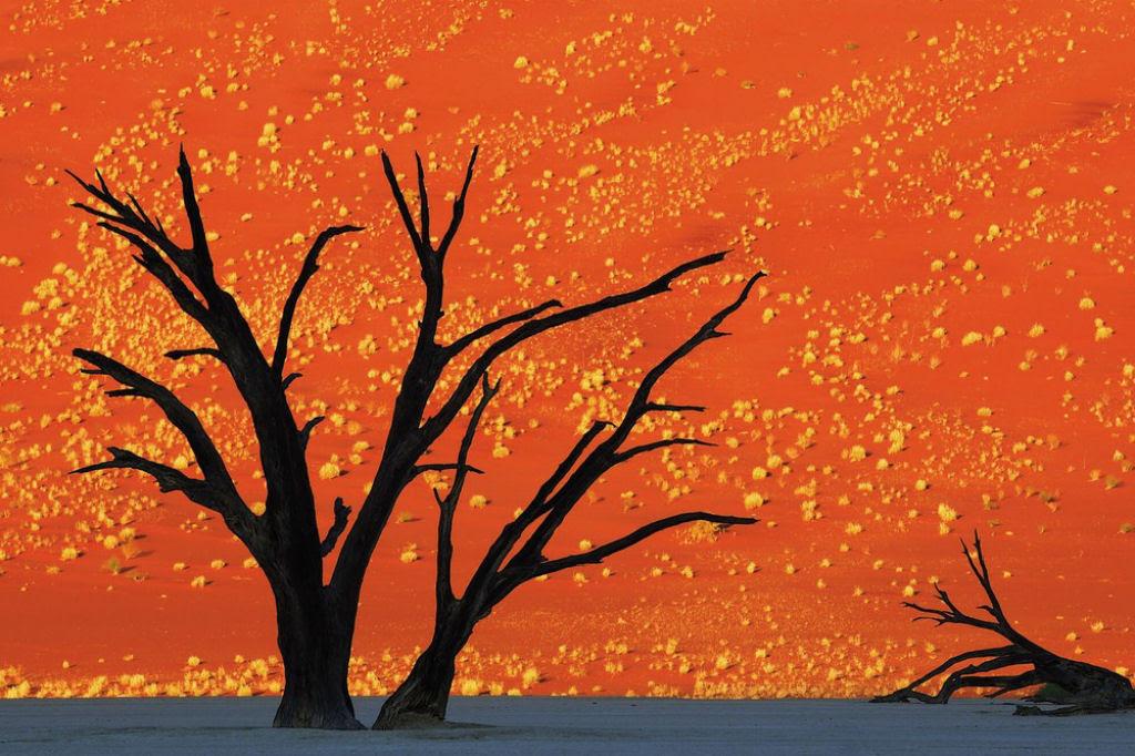 O lado colorido da África selvagem por Alex Bernasconi 09