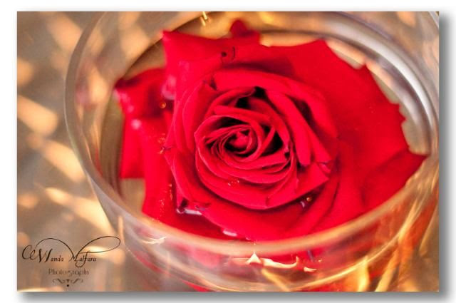 Thurs. Apr 5,2012, Roses are my favorite flower.