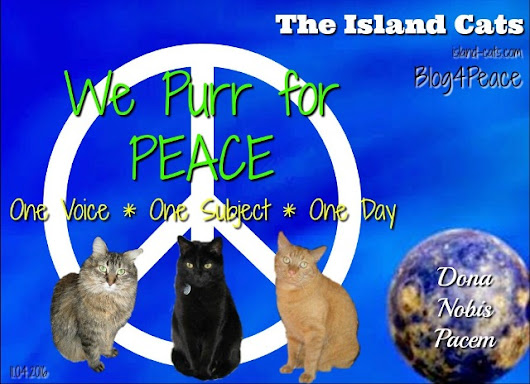 Dona Nobis Pacem – The Island Cats…Every Cat wants to be an Island Cat!