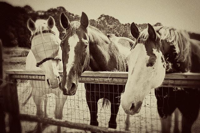 horses-vintage