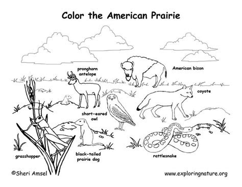 animal habitat coloring pages google search st grade