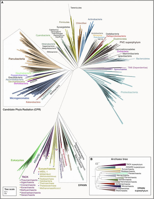 Major New Microbial Groups Expand Diversity and Alter our Understanding of the Tree of Life | How microbes emerge