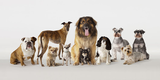 Which breed of dog is the smartest?