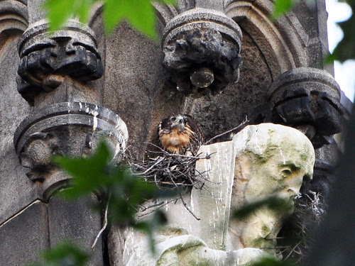 Red-Tail Baby