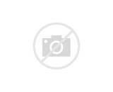 Black Coco Beans Images