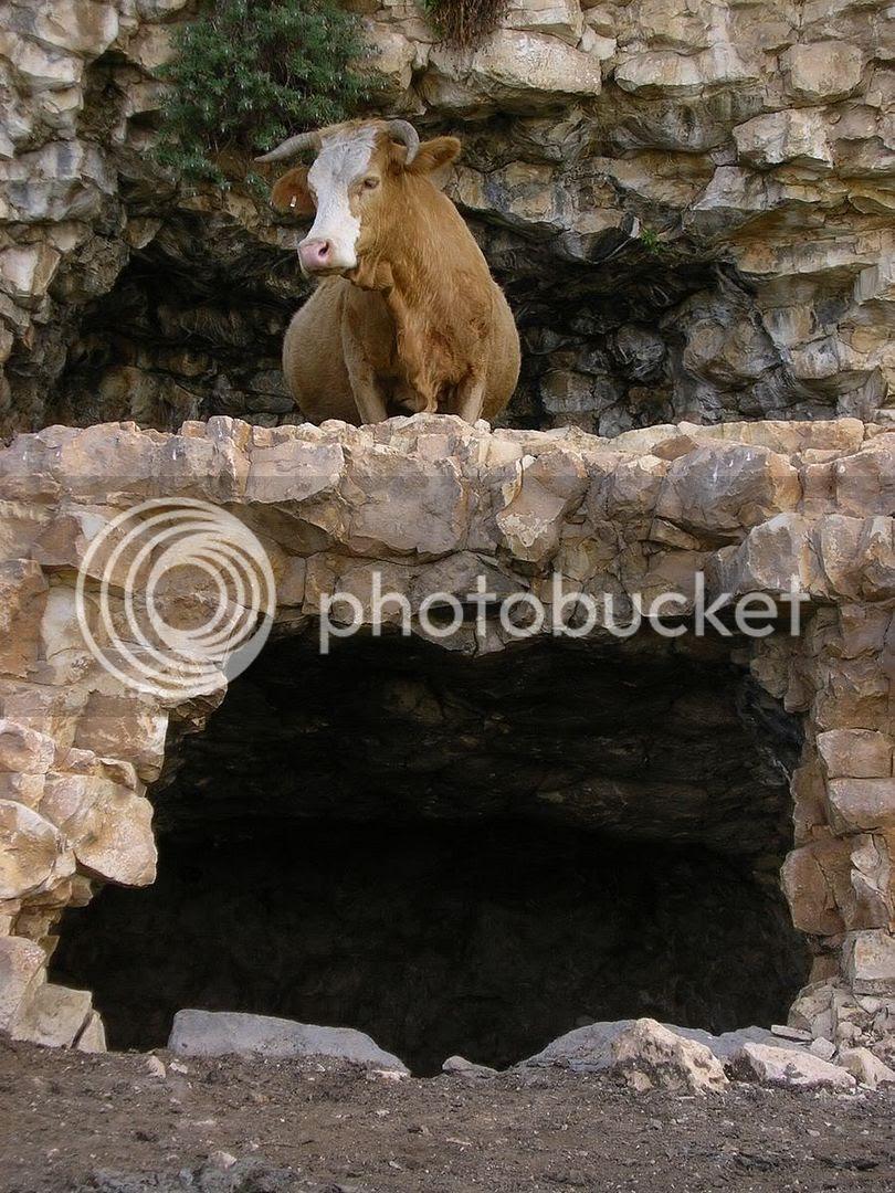 הדיירים הקבועים של מצודת המערות בהר ארבל